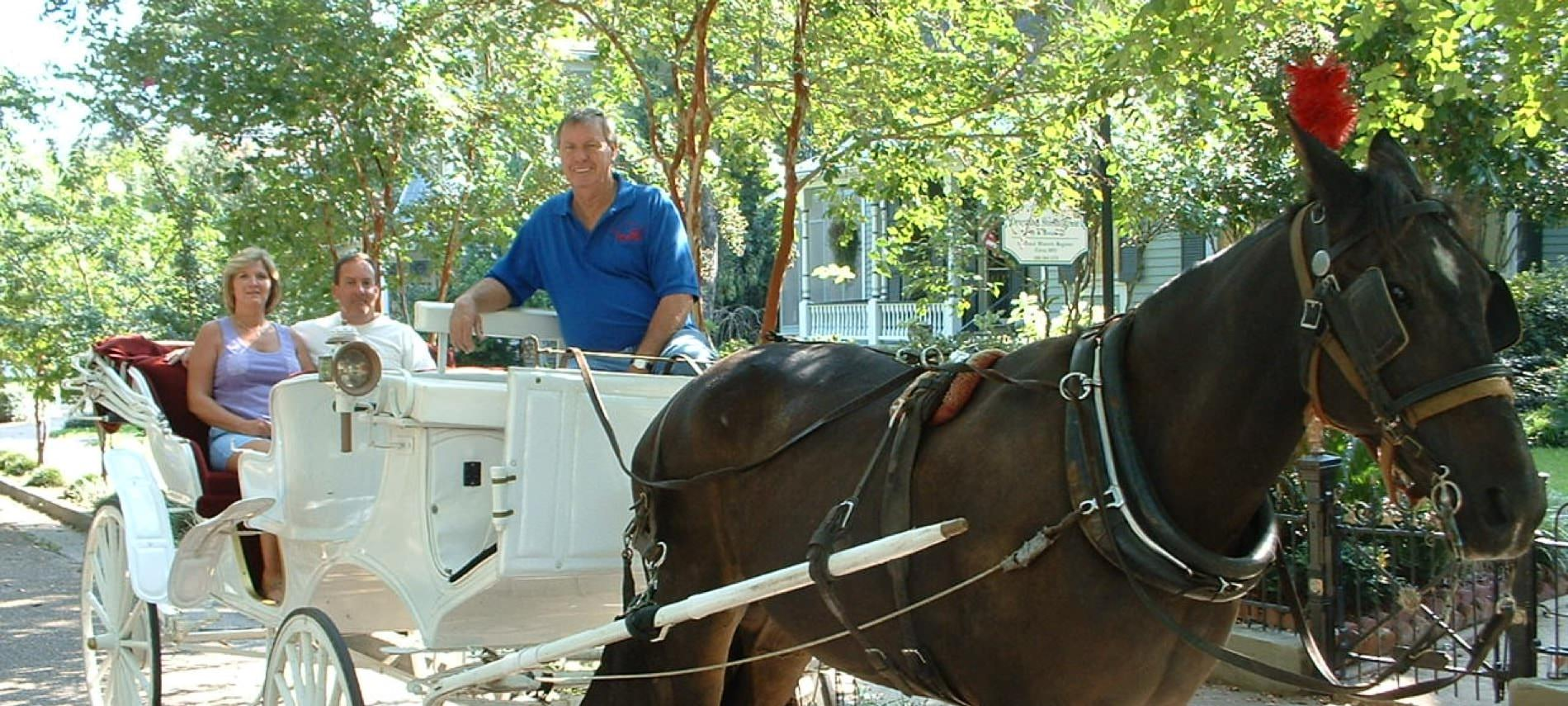 A man and two passengers enjoying a carriage ride pulled by a beautiful brown horse down the street surrounded by trees